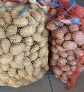 Sadbové brambory – pozdní Red Anne