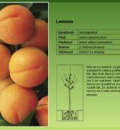 Ovocné stromy s balem – Meruňky, višně, třešně