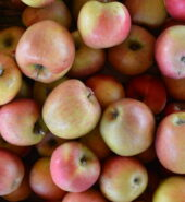 Jablka Gala CZ